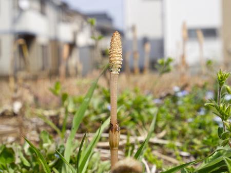Shimokoshi180400004