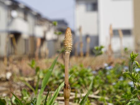 Shimokoshi180400005