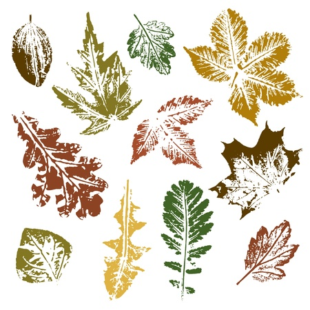 Collection of autumn leaves imprintsのイラスト素材
