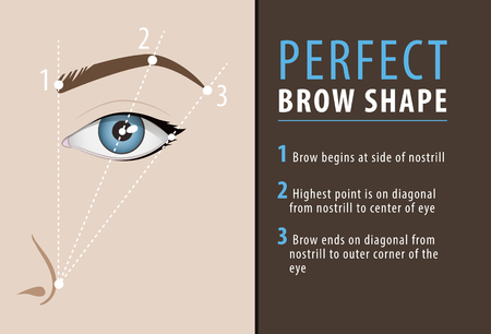 Perfect eyebrow shape tutorial. vector template