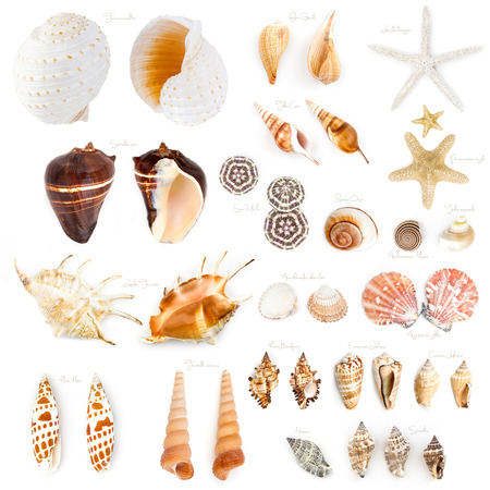 Seashell collection isolated on the white background.