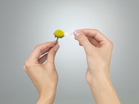 Photo pour female hands puling the last petal from a daisy on grey gradient background - image libre de droit