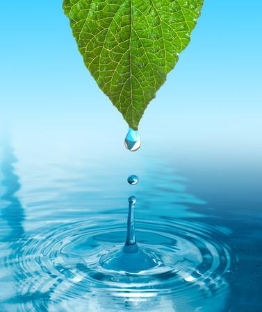 Foto de green leaf with water drop ans splash isolated o white - Imagen libre de derechos