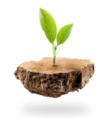 Plant Tree growing on a floating island on white