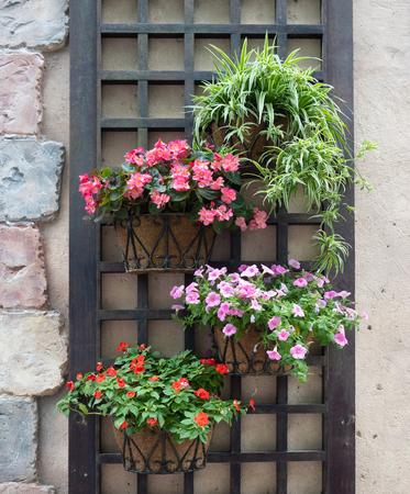 Photo pour colourful flower pots hanging on a wall - image libre de droit