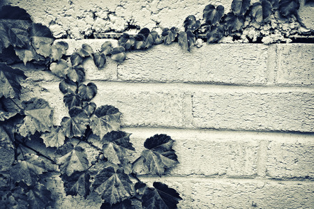 A gray brick wall with a partial border of grape vines and leaves. Toned in Sepia. Room for copy space.