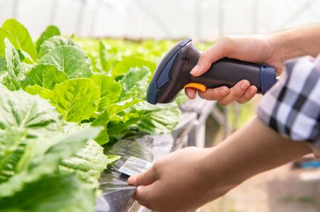 Photo pour Closeup of modern farmer checking organic vegetables identification with barcode scanner in hydroponics farm futuristic scanning system. Technology and futuristic business. Agriculture and farming - image libre de droit