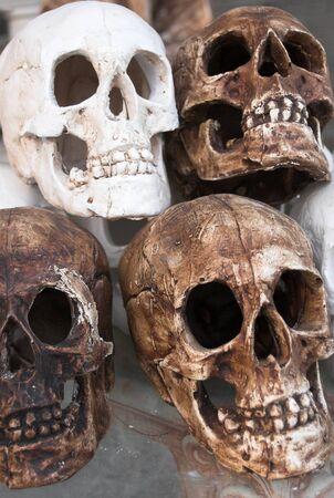 four fake skulls made of plaster