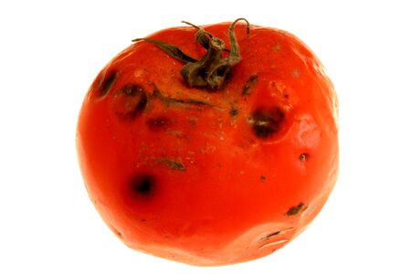 image of a rotten tomatoe captured on white