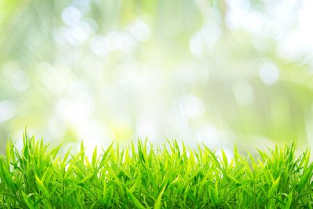 Photo for Spring or summer and grass field with sunny background - Royalty Free Image