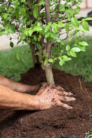 Protect the environment by planting forests.