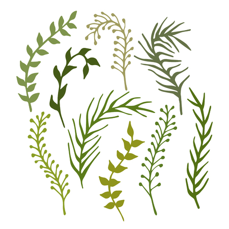 Illustration pour Set of hand-drawn branches, plants and seaweed isolated on white background. Vector illustration. - image libre de droit