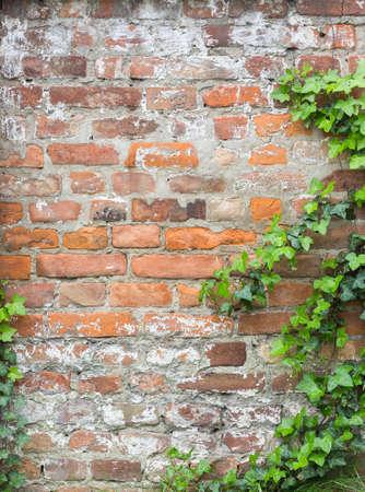 Foto de foliage on a brick wall texture - Imagen libre de derechos