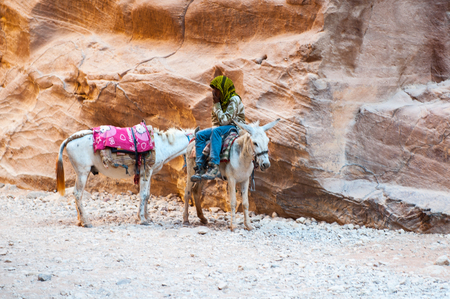 Little donkey in Petra, Jordan