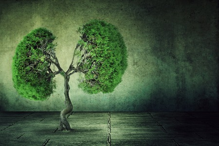 Photo pour Conceptual image of green tree shaped like human lungs growing from concrete floor isolated on a background of grey wall. Urbanization concept - image libre de droit