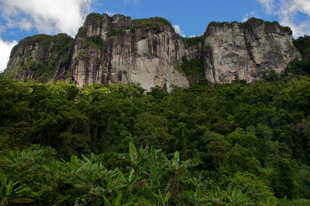 Rainforest Andrambovato Madagascar