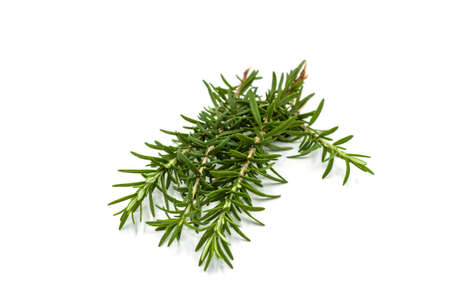 Photo for Fresh green rosemary isolated on white background. - Royalty Free Image