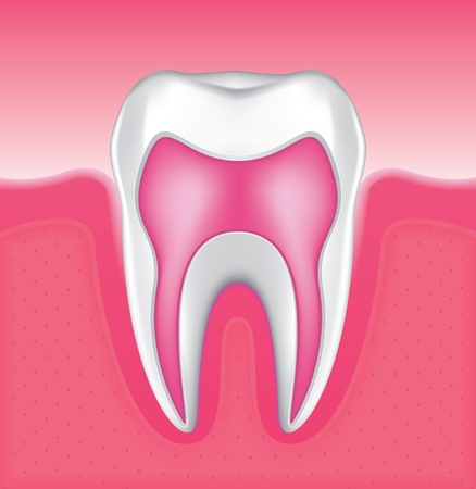 Drawing of the gums and tooth enamel