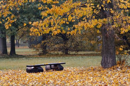empty bench and autumn landscape