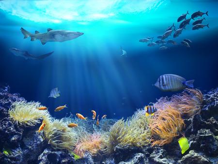 Marine life in reef. 3D illustration