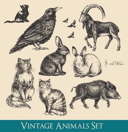 Illustration pour animals set - raven, cats, flying birds, rabbits, boar, goat - image libre de droit