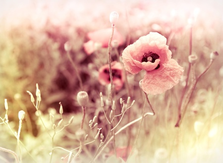 morning flowers meadow - vintage photo background