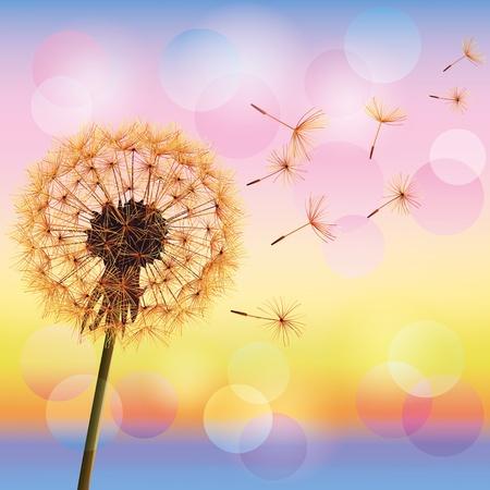 Illustration pour Flower dandelion on background of sunset, vector illustration  Place for text - image libre de droit