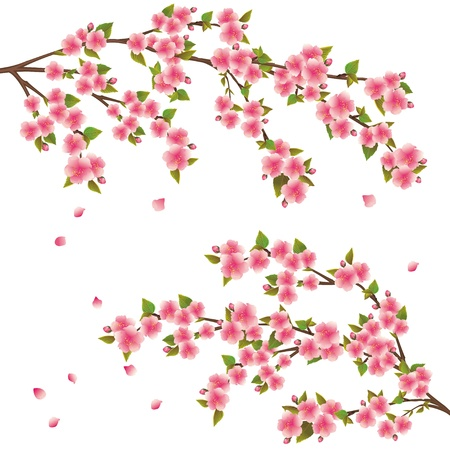 Illustration pour Realistic sakura blossom - Japanese cherry tree with flying petals isolated on white background - image libre de droit