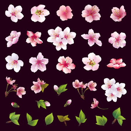 Illustration pour Big set of different beautiful cherry tree flowers and leaves isolated on black background. Collection of white pink  purple sakura blossom  japanese cherry tree.  Elements of floral spring design. Vector illustration - image libre de droit