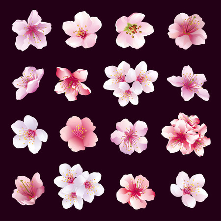 Illustration pour Set of different beautiful cherry tree flowers isolated on black background. Big collection of pink purple white sakura blossom japanese cherry tree. Elements of floral spring design. Vector illustration - image libre de droit