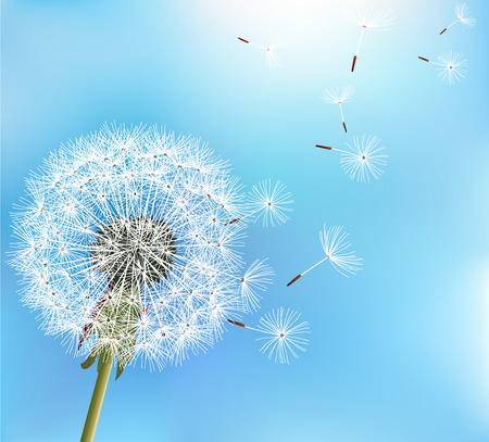 Vektor für Stylish nature blue background with flower dandelion blowing seeds. Trendy floral summer or spring wallpaper. Vector illustration - Lizenzfreies Bild