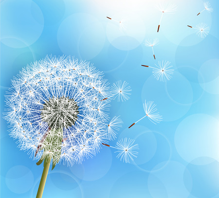 Trendy nature light blue background with flower dandelion blowing seeds. Stylish floral summer or spring wallpaper. Vector illustration