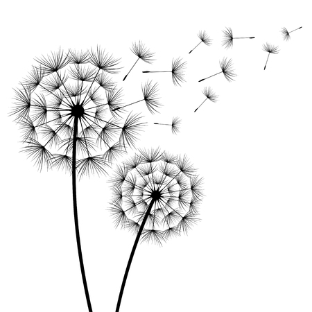 Illustration pour Two stylized black dandelions silhouette with flying fluff on white background. Floral stylish modern wallpaper with summer or spring flowers. Beautiful trendy nature backdrop. Vector illustration - image libre de droit