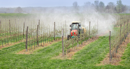Tractor sprays  insecticide or fungicide in apple orchard
