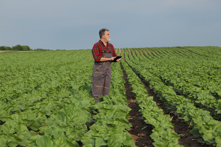 Photo pour Farmer or agronomist inspecting quality of green sunflower field in spring using tablet - image libre de droit