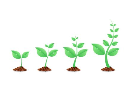 Phases plant growing. Planting tree infographic. Evolution concept. Seeds  sprout in ground. Vector illustration ...
