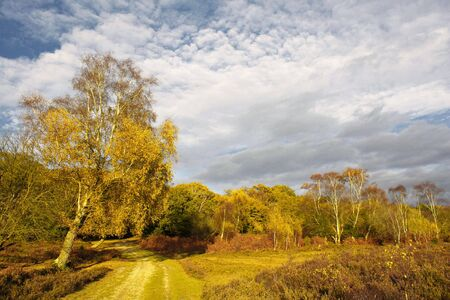 Scenic English Landscape of The New Forest National Park, Hampshire
