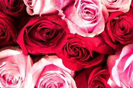 Foto de red and pink roses bouque.  Soft flowers for background with raindrops - Imagen libre de derechos