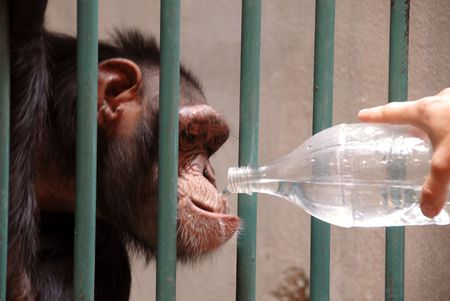 monkey in cage drinking water from plastic bottle