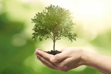 Photo pour Human hand holding tree against blurred natural background. Save nature, ecology, Earth day concept. - image libre de droit