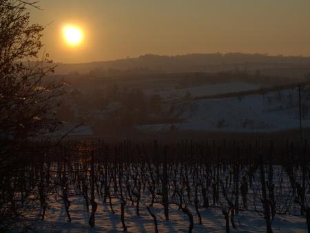 Abendsonne im Kaiserstuhl in den Reben