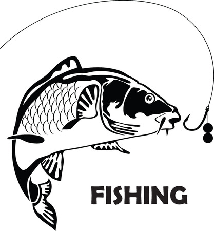 carp fish, vector illustration