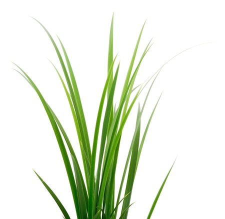 Photo pour Bunch of fresh green grass isolated on white background. - image libre de droit