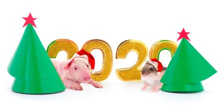 Foto de Christmas card  with two New Year trees and 2020 figure and adorable guinea pig and pig in Santa's red hat isolated on white background.  - Imagen libre de derechos