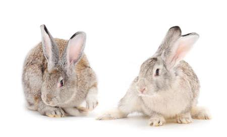 Foto de Gray rabbits isolated on a white background. - Imagen libre de derechos