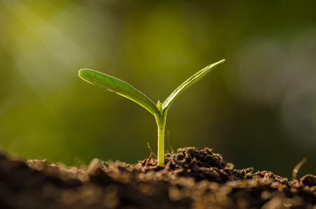 Photo pour Plant, Agriculture, Seeding,Seedling, Close up Young plant growing over green background - image libre de droit