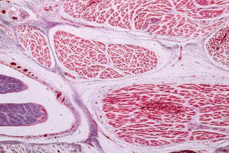 Foto de Study Histology of human, tissue bone under the microscopic in laboratory. - Imagen libre de derechos