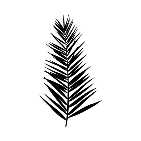 Illustration pour Silhouette of a palm leaf. Black tropical plant isolated on white background. Vector illustration for creating shadows, patterns - image libre de droit