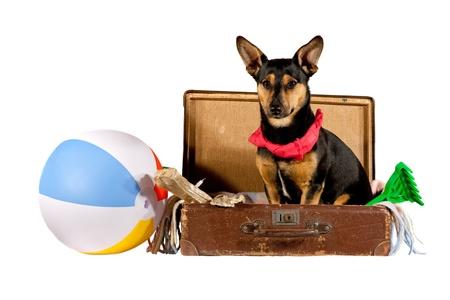 Foto de Dog in a suitcase - Imagen libre de derechos