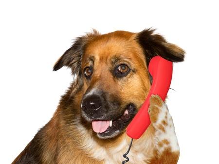 Photo pour Dog is with a telephone - image libre de droit